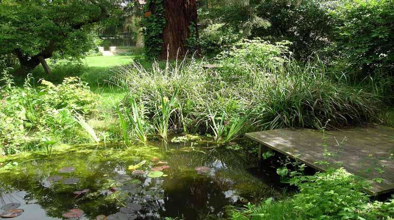 Spike jackson garden design in cambridgeshire gallery for Design wildlife pond