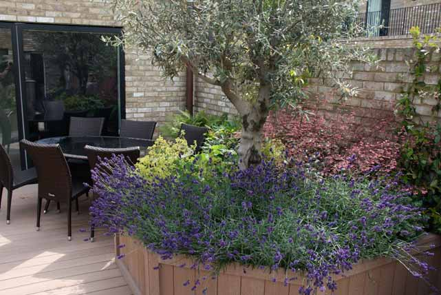 Spike jackson garden design in cambridgeshire projects for What to plant under olive trees